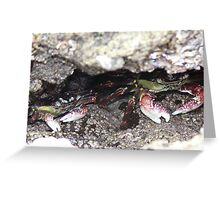 ROCKY CRABS Greeting Card