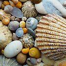 Sea Shells a plenty by Tony  Bazidlo