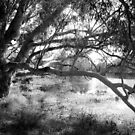 The lake at Dunkeld Community Park in Dunkeld, Victoria, in monochrome by Elana Bailey