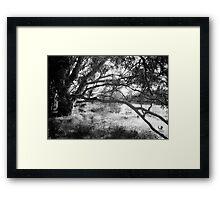 The lake at Dunkeld Community Park in Dunkeld, Victoria, in monochrome Framed Print