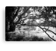 The lake at Dunkeld Community Park in Dunkeld, Victoria, in monochrome Canvas Print