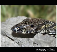 Goanna Macro by Bandicoot