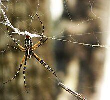 The Web by Julia Mayer