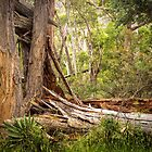 Trees in the Grampians, Victoria by Elana Bailey