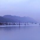 chilly misty drizzly (mizzle?) dusk at lake by Mackintosh Dam, Tullah, Tasmania by gaylene
