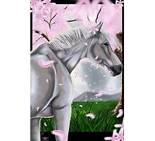 Horse Cherry Blossoms  Photographic Print
