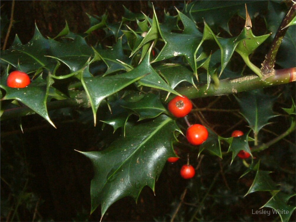 Holly Berry by Lesley White
