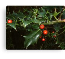 Holly Berry Canvas Print