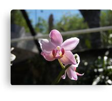 FLOWERS PRETTY IN PINK Canvas Print