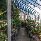 Inside the Greenhouse - view 1 by Jane Neill-Hancock