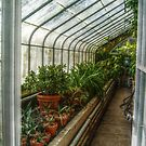 Inside the Greenhouse - view 2 by Jane Neill-Hancock