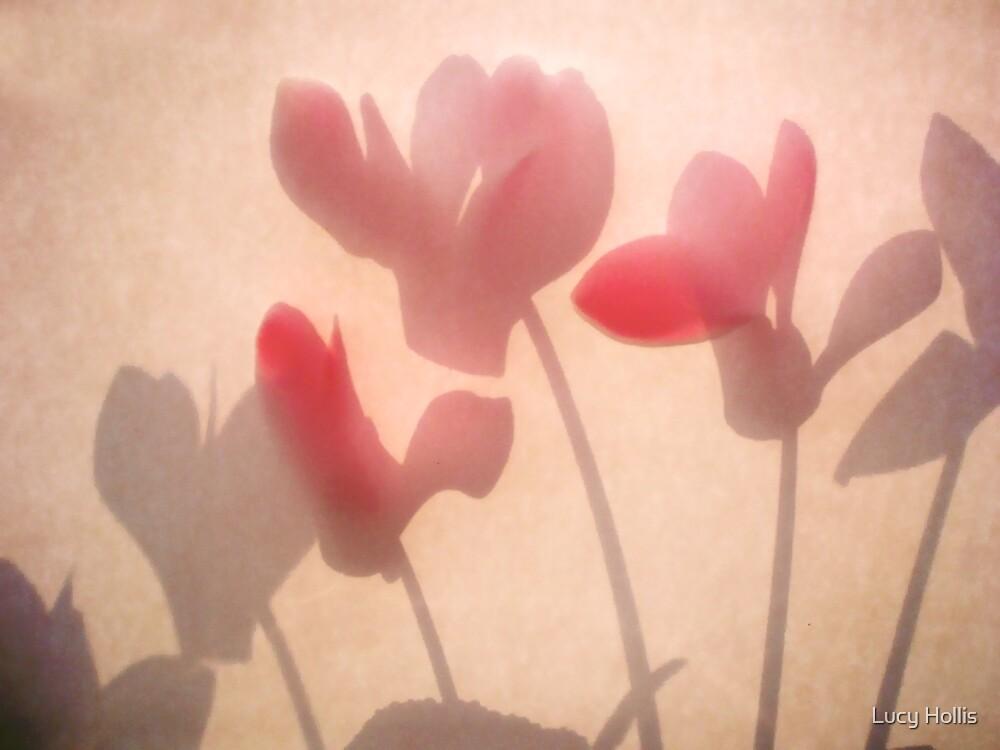 Cyclamen Shadows by Lucy Hollis