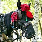 Gypsy horse by DavidGlez