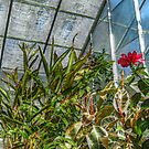 Inside the Greenhouse - view 3 by Jane Neill-Hancock