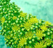 closeup flower by ndarby1