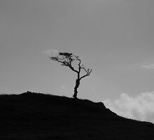 tree silhouette by MikeTheYokel