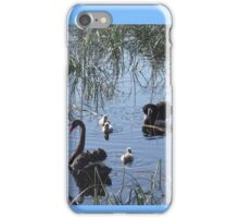 swans and cygnets iPhone Case/Skin