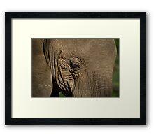 A majestic elephant Framed Print
