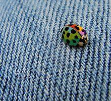Wonderbug by Jamie Lee