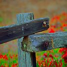 Old Fence Post by Nancy Stafford