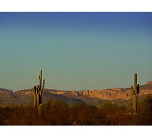Cactus at Dusk Photographic Print