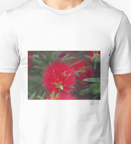 callistemon flower Unisex T-Shirt