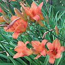lilies by gypsykatz