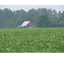 Bean field barn Photographic Print