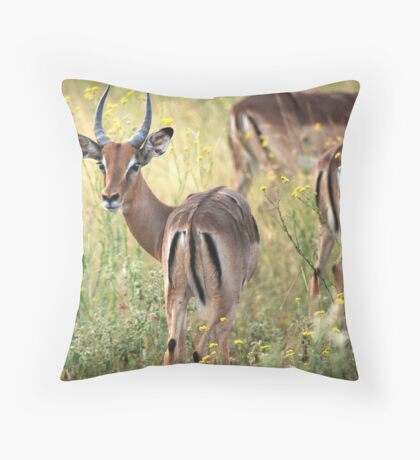 Impala grazing in the early evening. Throw Pillow