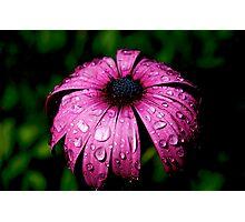 Purple Rain Photographic Print