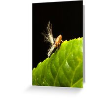 Passionvine Hopper Greeting Card