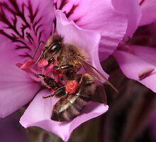 Bee by Colin  Ewington