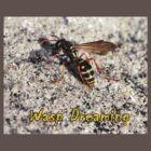 Wasp Dreaming by wondawe