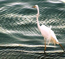 Afternoon wade by Pete Chennell