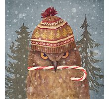 Christmas Owl  Photographic Print