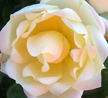 Petal Perfect by Maurine Huang