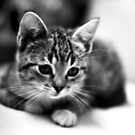 Kitty Kat by Ganz