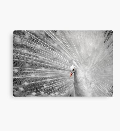 White Princess Canvas Print