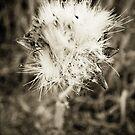 flower explosion by Nikos Kantarakias