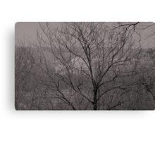 DC through the trees Canvas Print