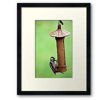 Thieving Woodpecker Framed Print