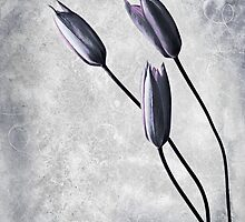 Tulips by PhotoDream Art