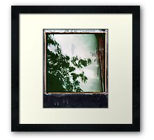 wet trees Framed Print