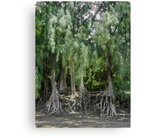 Anahola Bay Beach Root Structure Canvas Print