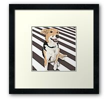 Banjo -Good Dog! Framed Print