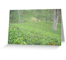 Tea gardens of Sri Lanka Greeting Card