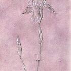 Iris Germanica by Mark Calderwood