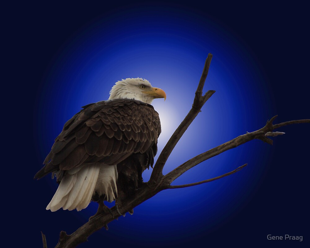 The Eagle by Gene Praag