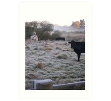 Cows in the mist Art Print