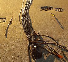 Beach Art by John Nelson